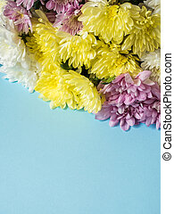 Bouquet of multicolored chrysanthemums on a blue background Place for text