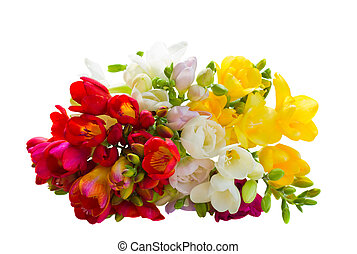 bouquet of multicolored freesias flowers