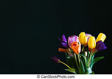 Bouquet of multicolored tulips flowers on a dark background