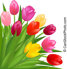 Bouquet Of Multicolored Tulips, Isolated On White Background, Vector Illustration