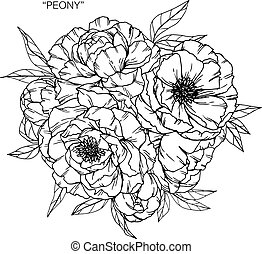 Bouquet of peony flowers drawing.