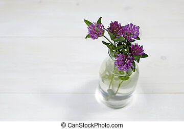 Bouquet of pink clovers in glass vase on white background