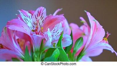Bouquet of pink flowers - Bouquet of pink biutiful flowers.