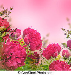 Bouquet of pink peonies, floral background
