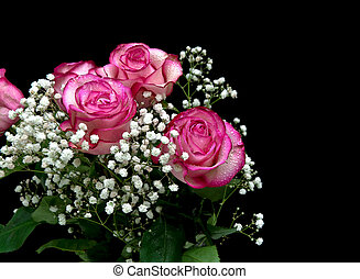 bouquet of pink roses isolated on black background
