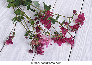 Bouquet of purple flowers columbine