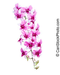 bouquet of purple orchid flower isolated on white background