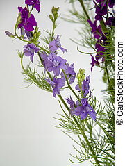Bouquet of purple wildflowers on a white background