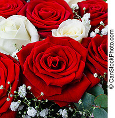 Bouquet of red and white roses on a white background.