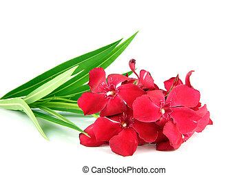 Bouquet of red flowers.