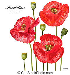 Bouquet of red poppies for your design