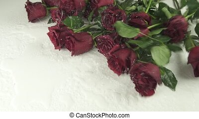 Bouquet of red roses falling on white background with water slow motion stock footage video