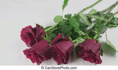 Bouquet of red roses falling on white background with water timelapse stock footage video
