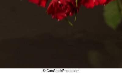 Bouquet of red roses falling onto water
