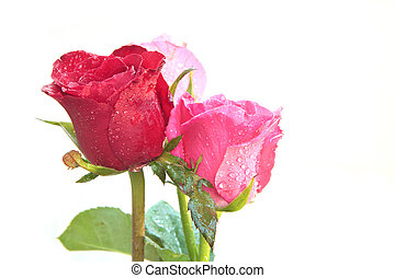 bouquet of red roses flower isolate