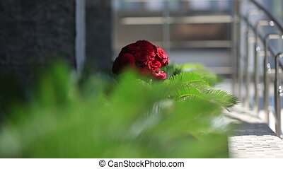 Bouquet of red roses in focus with green background