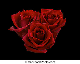 Bouquet of red roses isolated on a black background