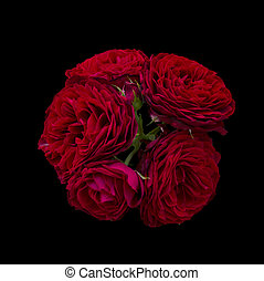 Bouquet of red roses isolated on black background