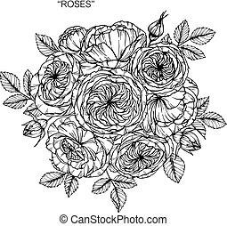 Bouquet of rose flowers drawing.