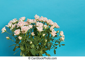 Bouquet of small pale pink roses isolated on a blue background.