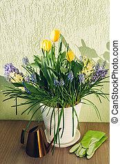 Bouquet of spring flowers. Yellow tulips, hyacinths, blue muscari grow in pot at home. Watering can, gloves of gardener