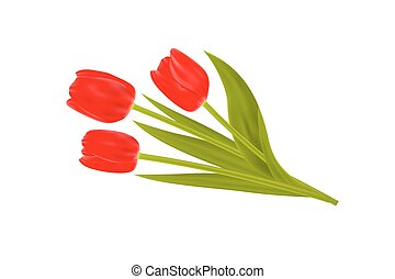 Bouquet of spring tulips flowers isolated on white background.