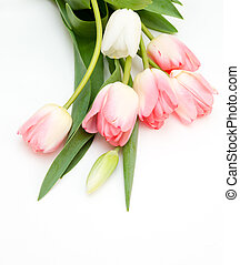 Bouquet of spring tulips on a white background.