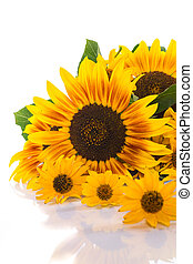 bouquet of sunflowers - beautiful bouquet of sunflowers on a...