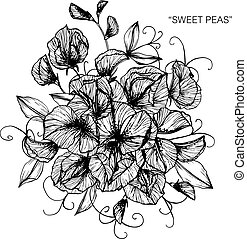 Bouquet of sweet pea flowers drawing.