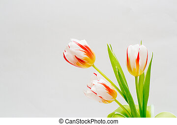 bouquet of tender tulips on a white background