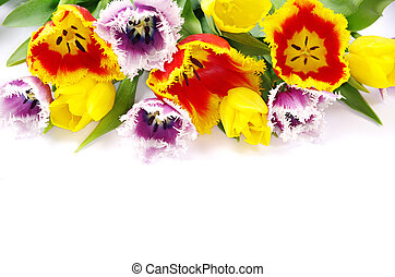 tulips  - bouquet of the tulips on white background
