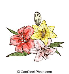 Bouquet of three colorfull lily flowers hand drawn isolated on white background. Vector illustration.
