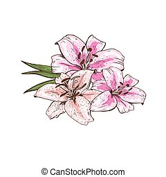 Bouquet of three pink lily flowers hand drawn isolated on white background. Vector illustration.