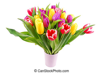 bouquet of tulip flowers isolated on white