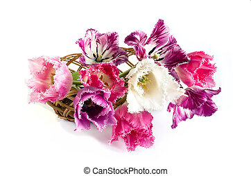 bouquet of tulips are on a white background