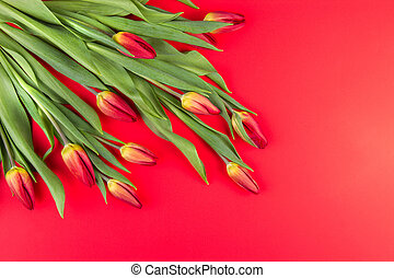Bouquet of tulips in a corner of the frame on red background. Top view.