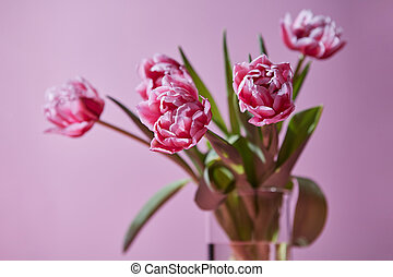 998d9c6839c3b Two pink tulips in a transparent vase on a pink background. spring ...
