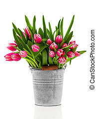bouquet of tulips in an bucket on a white background
