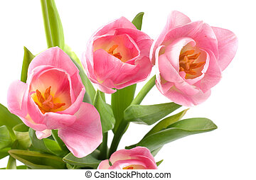 Bouquet of tulips.