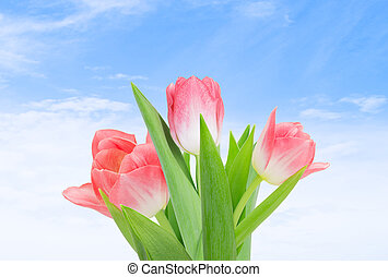bouquet of tulips on a background of blue sky