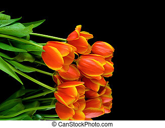 bouquet of tulips on a black background