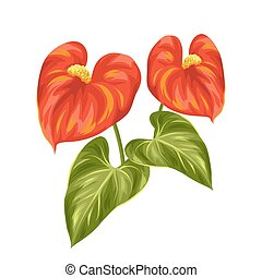Bouquet of two decorative flowers anthurium on white background