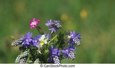 Bouquet Of Violet Flowers