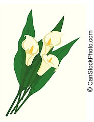 Bouquet of white calla lilies with leaves isolated on white background. Flowers for woman gift. Vector illustration