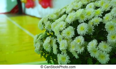bouquet of white flowers Gerbera, nature flower - bouquet of...