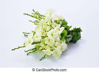 Bouquet of white flowers on white background