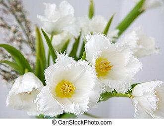 Bouquet of white fringed tulips