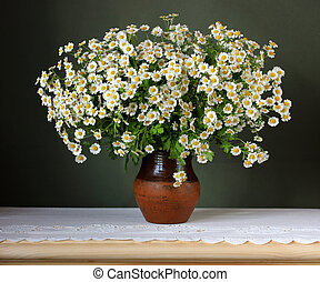 bouquet of white garden daisies on a green background.