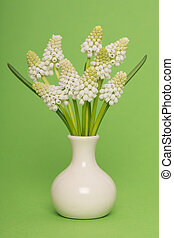 Bouquet of white grape hyacinths in a white vase