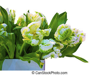 bouquet of white tulips isolated on white background